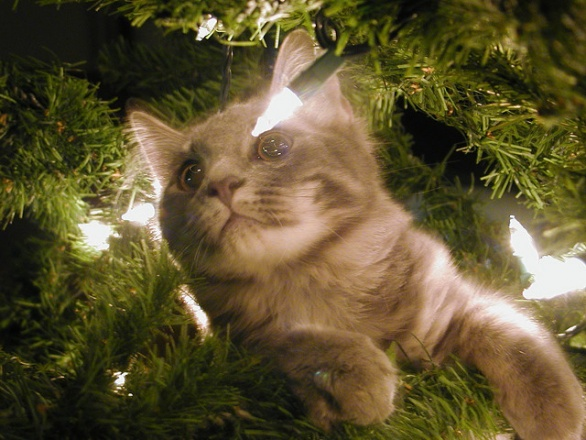 How To Keep Your Cat From Climbing The Christmas Tree